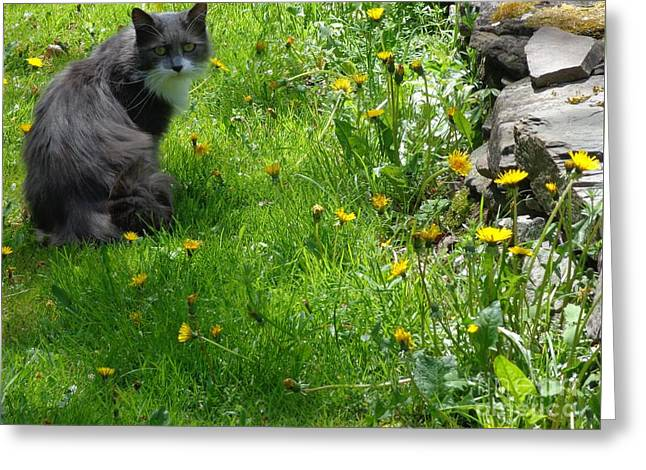 Greeting Card featuring the photograph Dandy Lion Cat by Christina Verdgeline