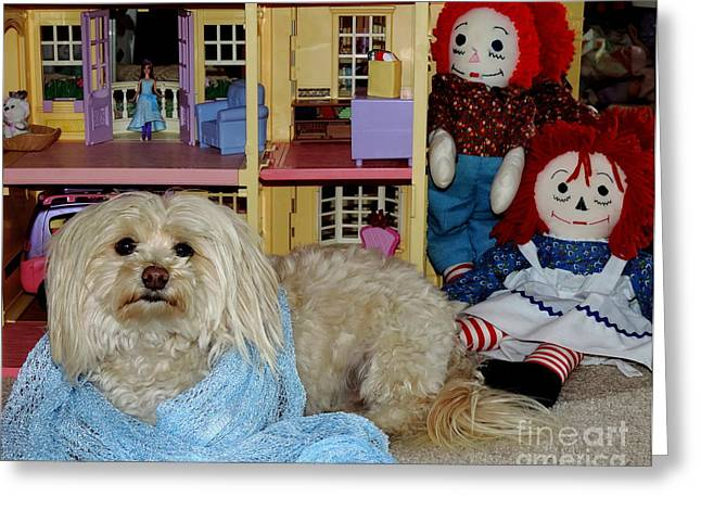 Dandy Plays House Greeting Card by Vicki Buckler