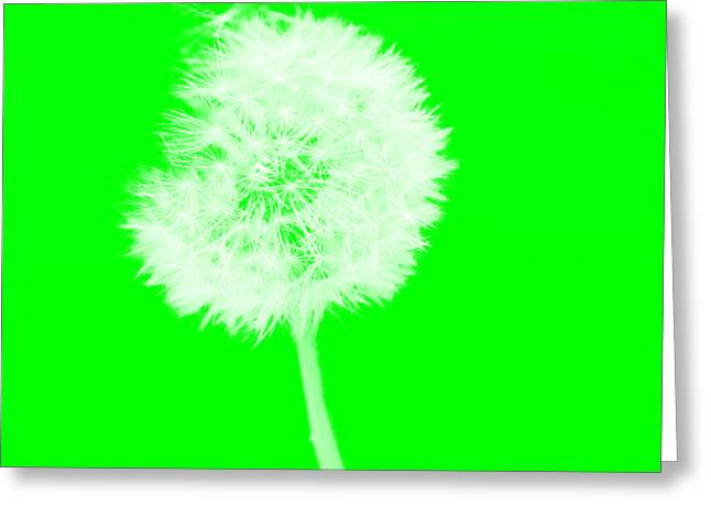 Greeting Card featuring the digital art Dandylion Green by Clayton Bruster