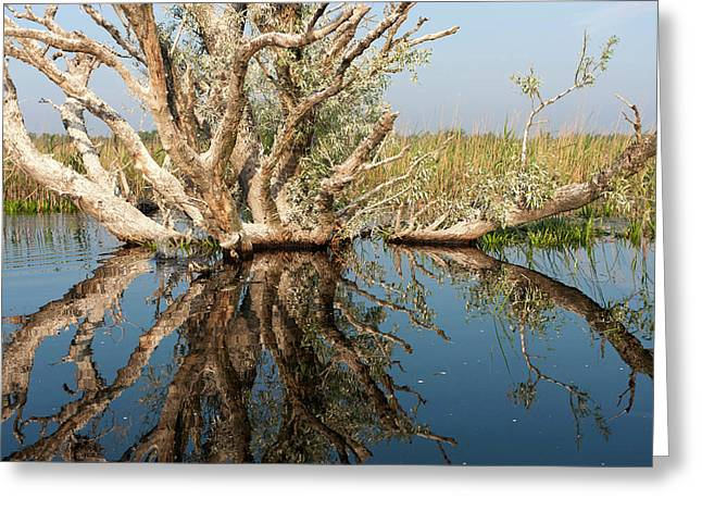 Danube Delta During Spring Greeting Card by Martin Zwick