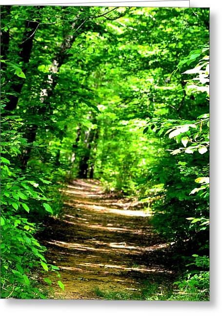 Dappled Sunlit Path In The Forest Greeting Card by Maria Urso