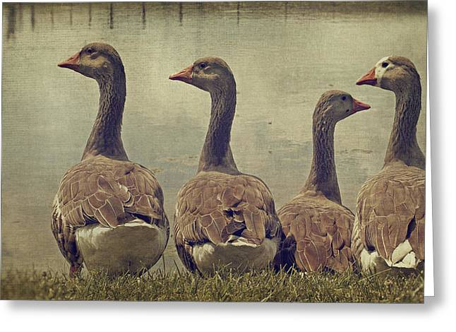 Dare To Be Different Greeting Card by Kathy Jennings