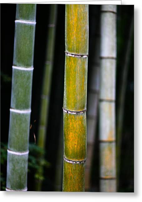 Dark Bamboo Greeting Card