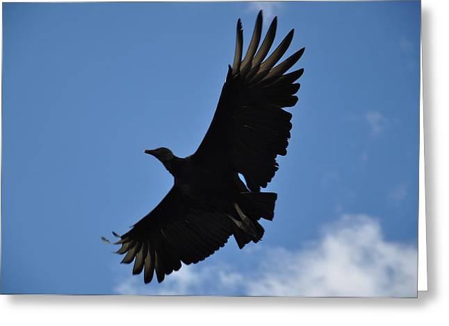 Dark Eagle  Greeting Card