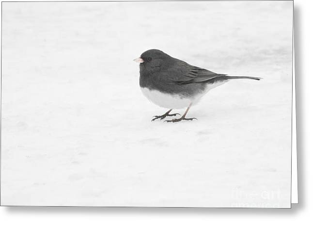 Greeting Card featuring the photograph Dark-eyed Junco In Winter by Anita Oakley