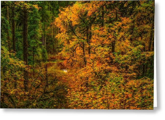 Dark Forest Greeting Card