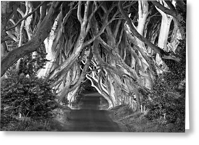 Dark Hedges B W Greeting Card by Annie Sobol