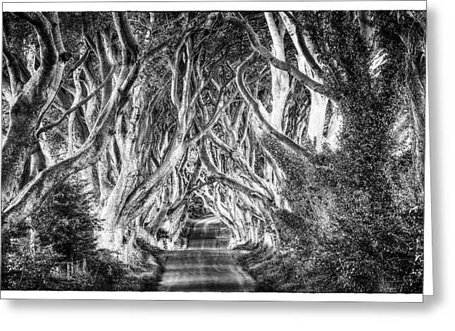 Dark Hedges Greeting Card by Craig Brown