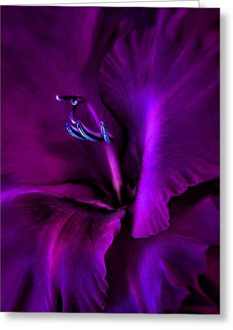 Dark Knight Purple Gladiola Flower Greeting Card by Jennie Marie Schell