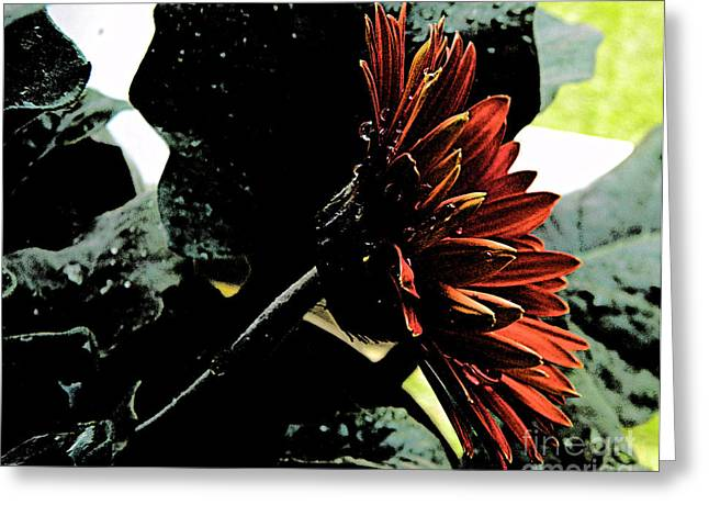 Dark Love Greeting Card by Lorraine Heath