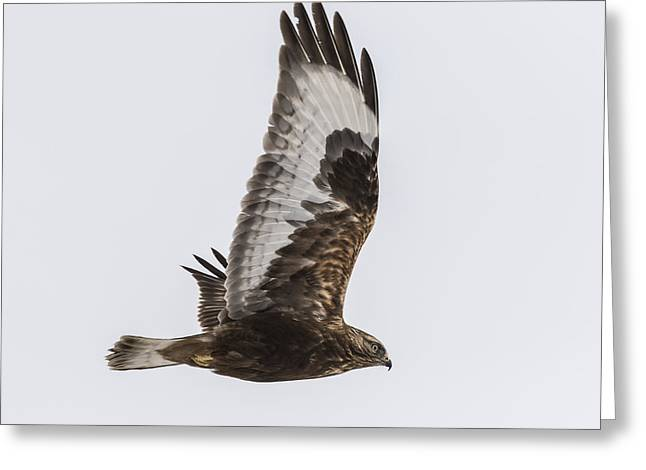 Dark Morph In Flight Greeting Card by Thomas Young