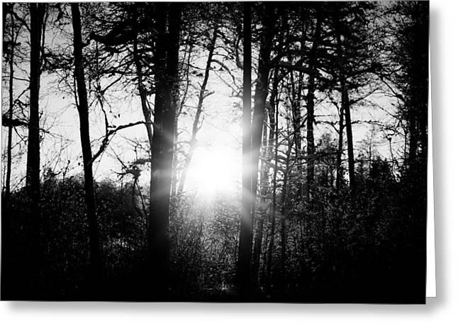 Dark Nature Greeting Card by Robert Hellstrom