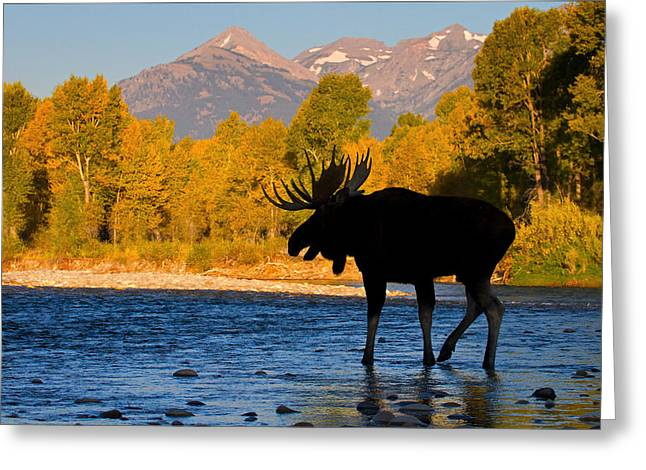 Greeting Card featuring the photograph Dark Side Moose                               by Aaron Whittemore
