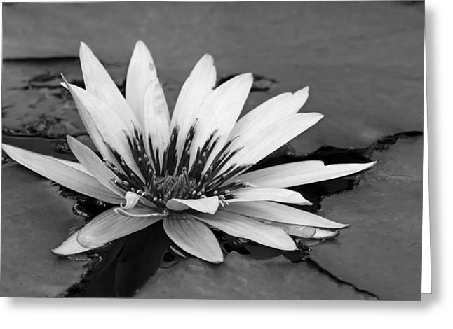 Greeting Card featuring the photograph Dark Throated Beauty II by Dawn Currie