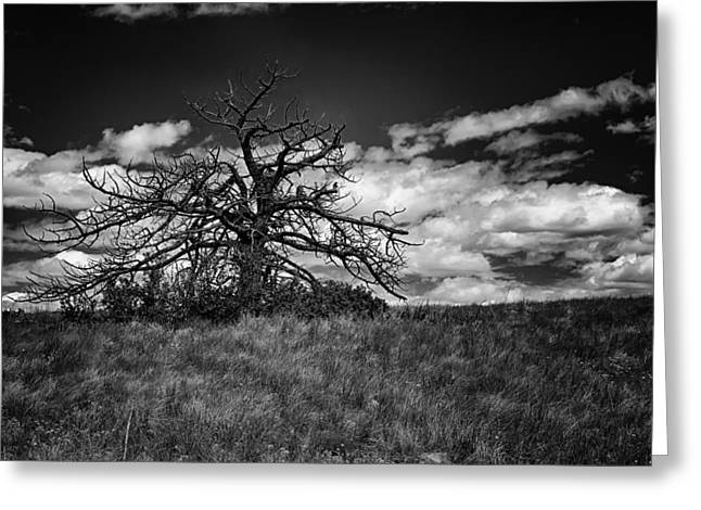 Dark Tree Greeting Card by Tony Boyajian