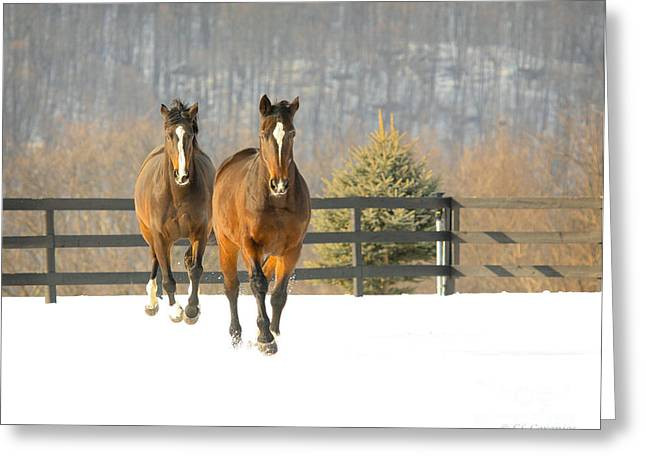 Dashing Through The Snow Greeting Card by Carol Lynn Coronios