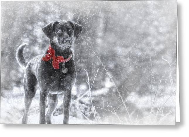 Dashing Through The Snow Greeting Card