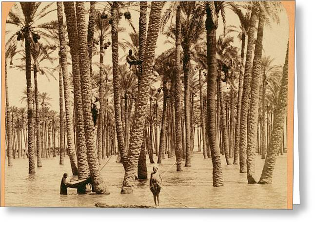 Date Palms And Nile Flood Greeting Card by Library Of Congress
