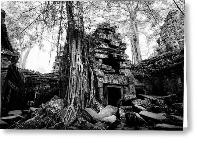 Dawn At Ta Prohm Greeting Card by Julian Cook