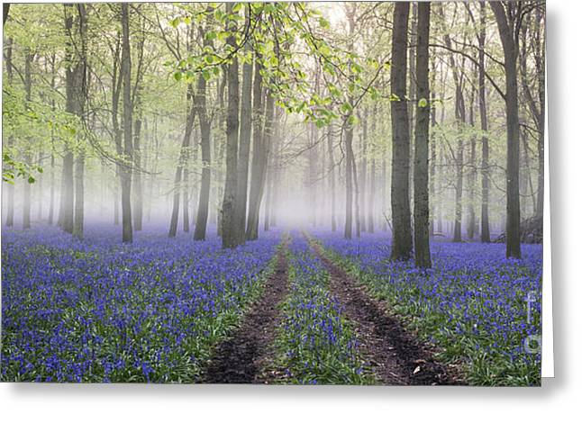 Dawn Bluebell Wood Panoramic Greeting Card by Tim Gainey