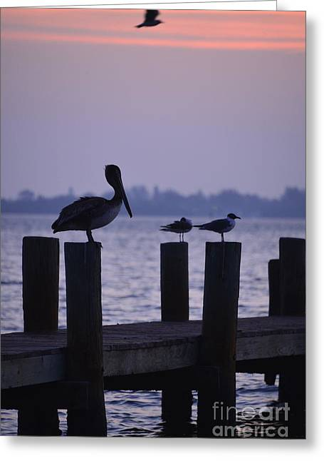 Dawn Brings Hungry Birds Greeting Card