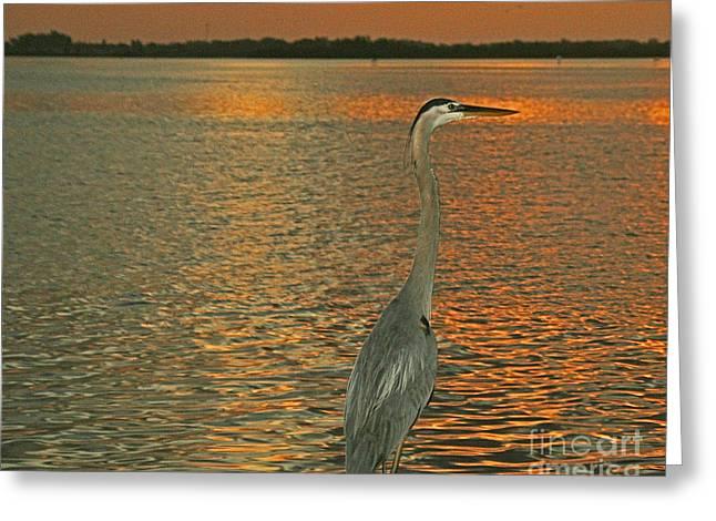 Dawn Greets A Blue Heron Greeting Card by Joan McArthur