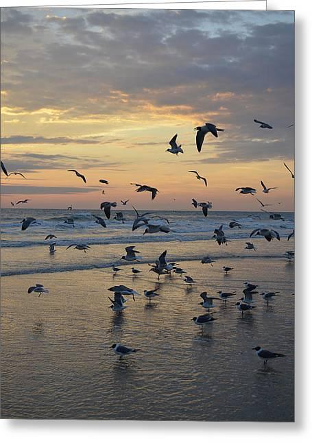Dawn Gulls Greeting Card