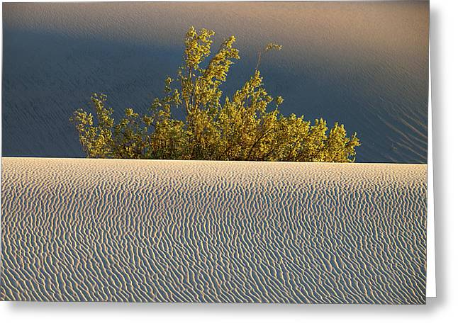 Dawn Mesquite  Greeting Card by Joe Schofield