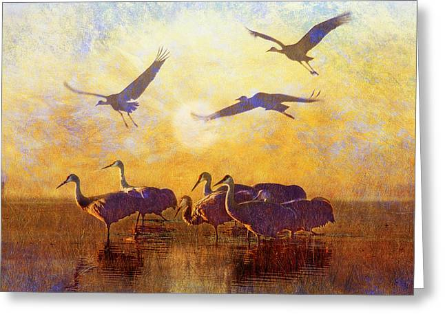 Dawn On The Bosque Sandhill Cranes Greeting Card by R christopher Vest