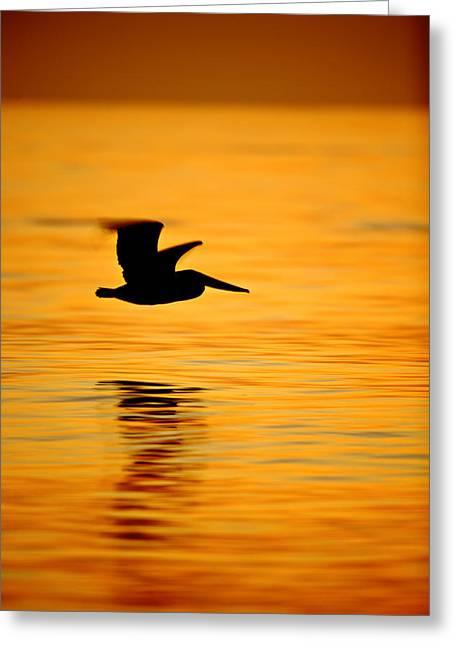 Dawn Pelican  C6j8211 Greeting Card