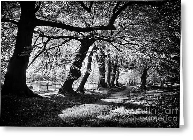 Dawn Tree Light  Greeting Card by Tim Gainey