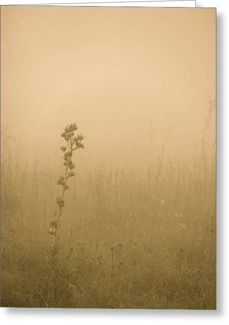 Dawning Mist Greeting Card by Tim Good