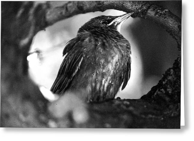 Greeting Card featuring the photograph Dax's Bird by Tarey Potter