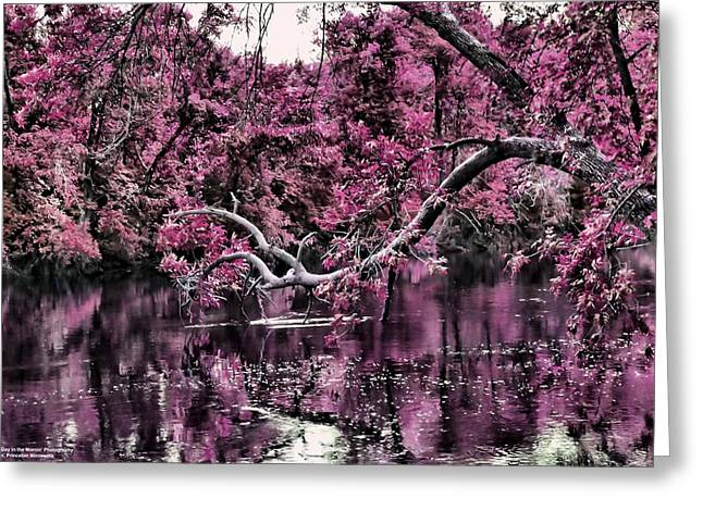 Day Dreaming Greeting Card by Michelle and John Ressler