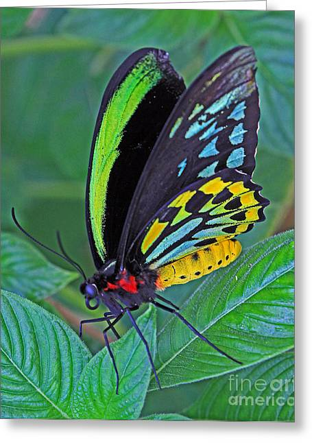 Day-glo Butterfly Greeting Card