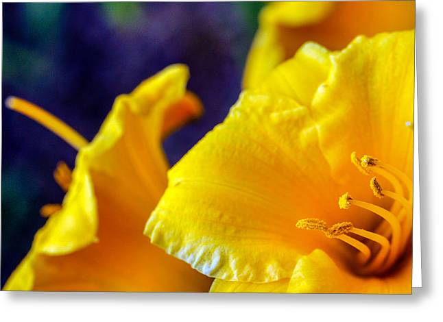 Greeting Card featuring the photograph Day Lilies by Cathy Donohoue