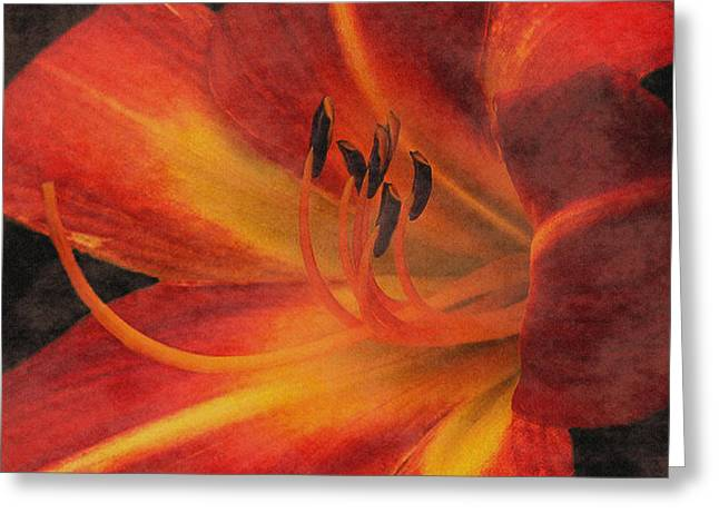 Day Lilly Greeting Card by Dennis Buckman