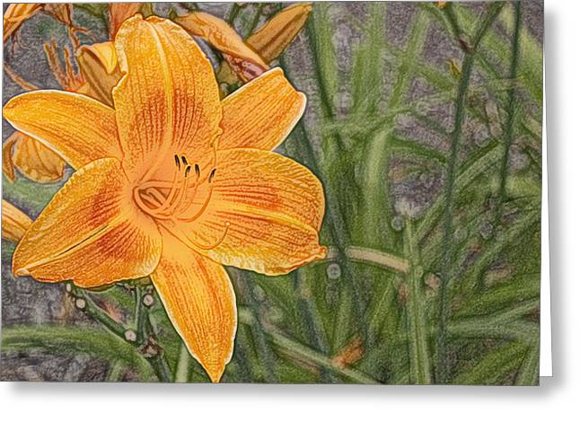 Day Lilly - Hemerocalle Greeting Card by Nature and Wildlife Photography
