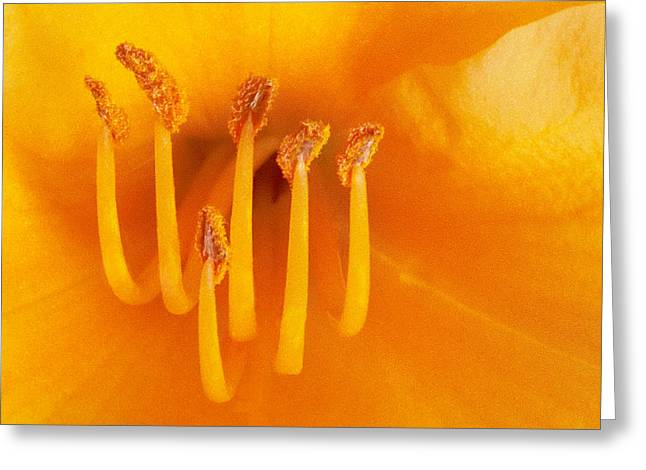 Day Lily II Greeting Card