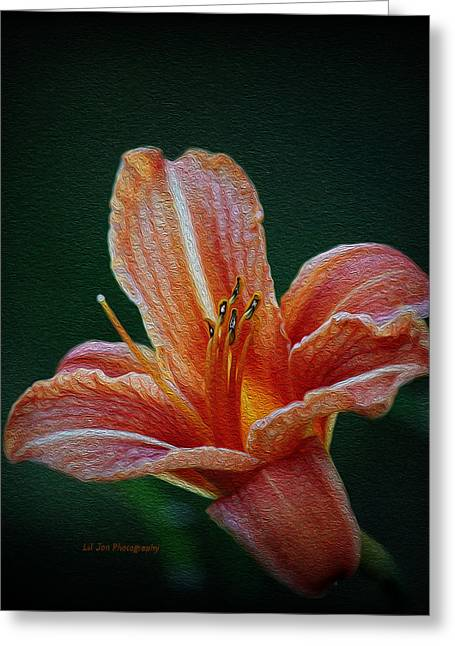 Day Lily Rapture Greeting Card
