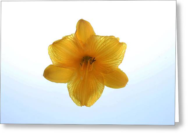Day Lily Greeting Card by Richard Stephen