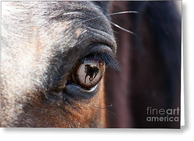 Daydream Of A Horse Greeting Card