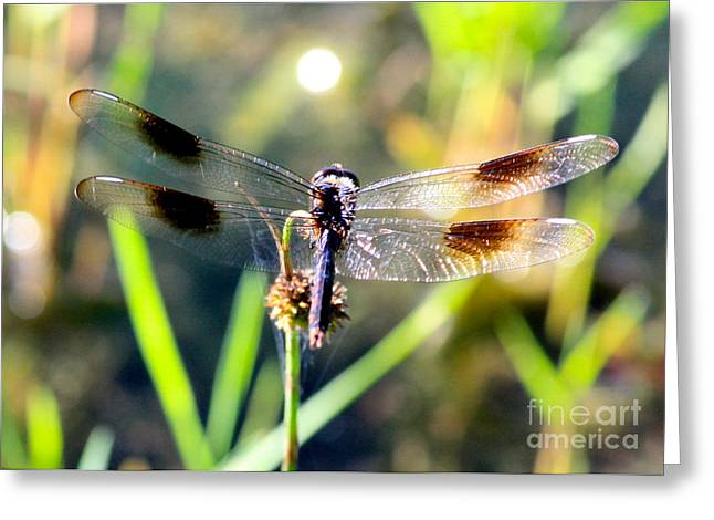Daydreaming Greeting Card by Carol Groenen