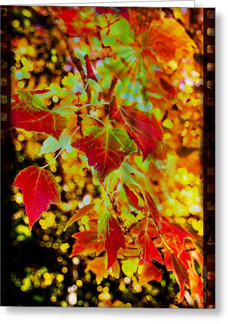 Daydreaming In Color Greeting Card