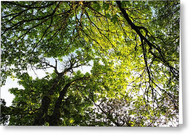 Greeting Card featuring the photograph Daydreaming In The Hammock by Belinda Greb