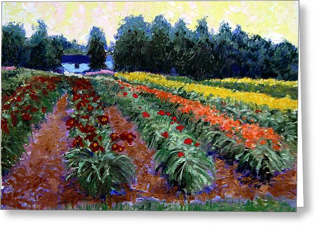 Daylily Delight Greeting Card by David Zimmerman