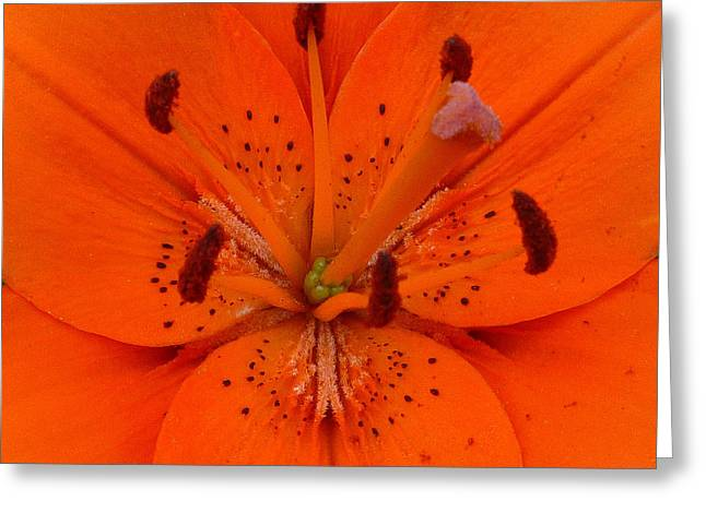 Daylily Heart Greeting Card