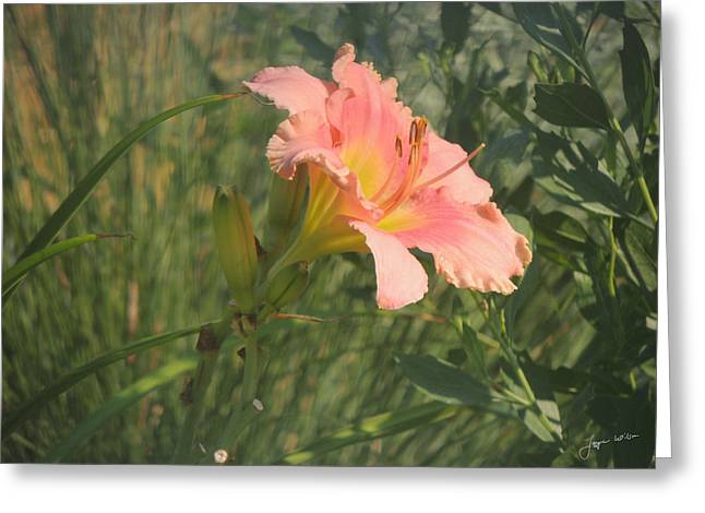 Greeting Card featuring the photograph Daylily In The Sun by Jayne Wilson
