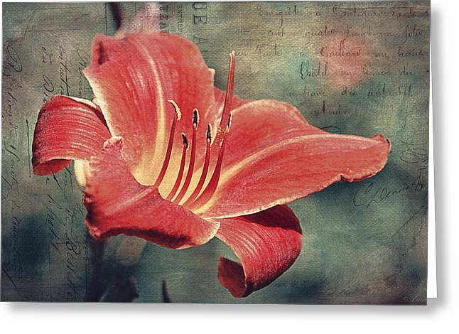 Daylily Postcard Greeting Card by Maria Angelica Maira