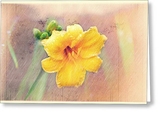 Daylily  Showers Greeting Card by Mary Timman